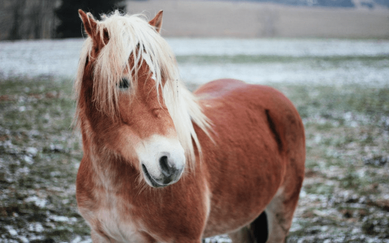 Bara-art free photo - Pony in winter