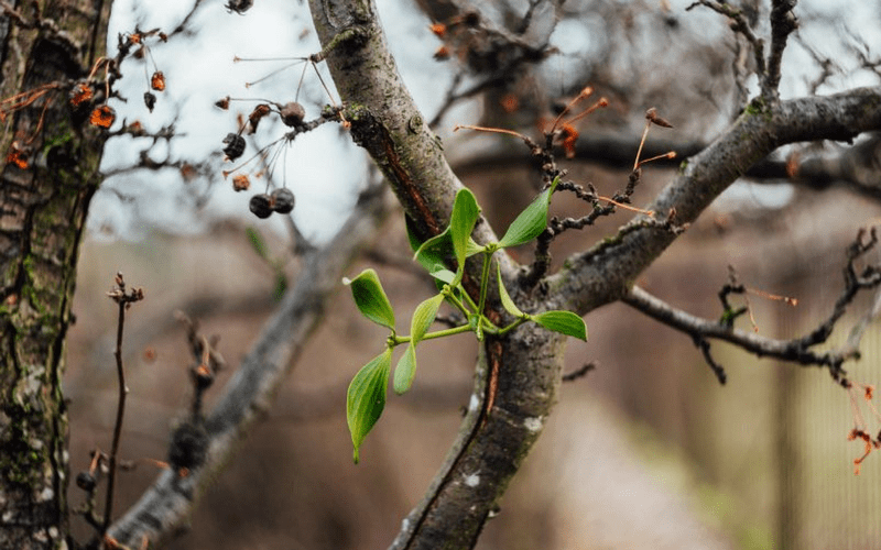 Freestocks free photo - Green tree buds