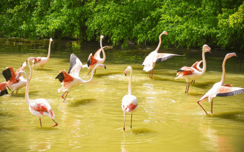 Moni's Photo free photo - Pink flamingos in water