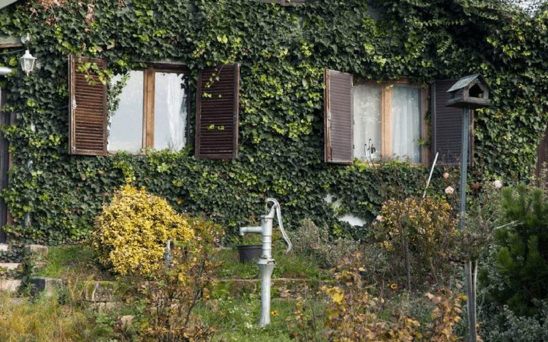 Realgraphy free photo - Building covered in ivy